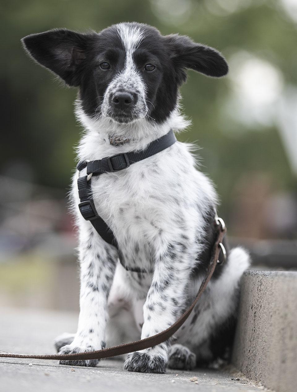 Unser Praxishund Yoda